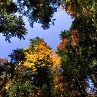 Herbstlich wirds